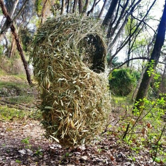 Kim Cao - wandering nest 2013.jpg