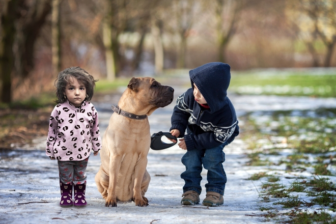 Pet Dog .jpg